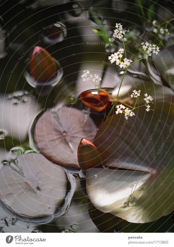 lebendwasser Natur Urelemente Wasser Sommer Pflanze Blatt Blüte Teich Fröhlichkeit Vorsicht ruhig Gesundheit Idylle Sinnesorgane Wellness Seerosen Seerosenblatt