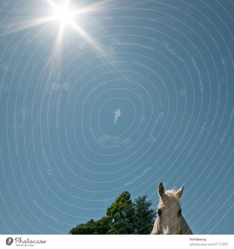 gandalf ist in den schatten gestürzt Natur Himmel Baum Sonne Pflanze Tier Leben Feld Wetter Umwelt Pferd Klima Neugier Schönes Wetter Haustier Interesse