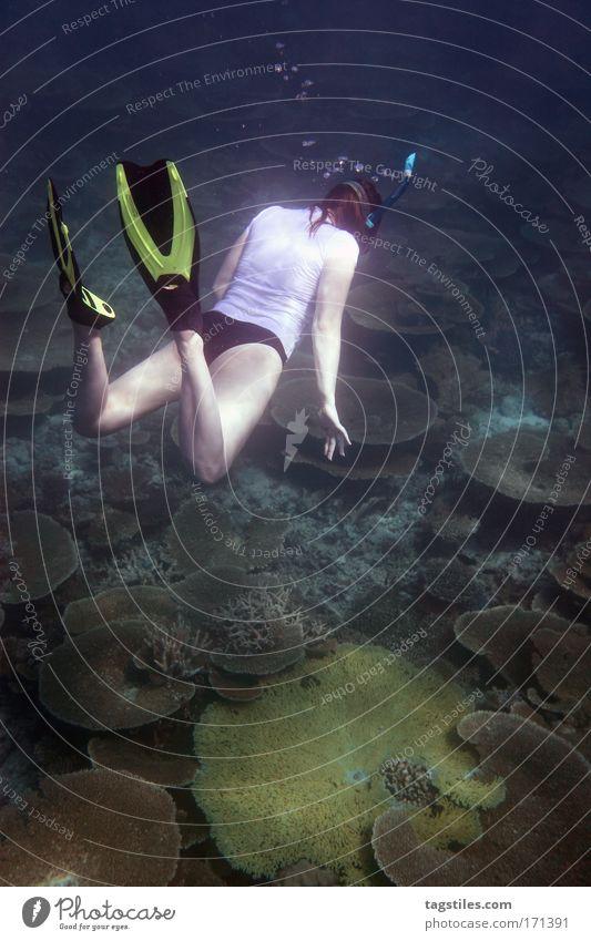 WHAT THE ... ?! Frau Wasser Meer Ferien & Urlaub & Reisen Suche Unterwasseraufnahme tauchen unten entdecken Indien Malediven finden erstaunt Schwimmhilfe