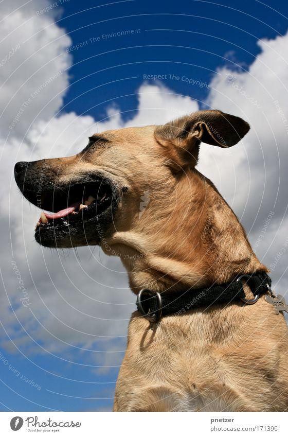 Jonny Farbfoto Außenaufnahme Tag Starke Tiefenschärfe Froschperspektive Wegsehen Natur Luft Himmel Wolken Sommer Schönes Wetter Tier Haustier Hund Tiergesicht 1
