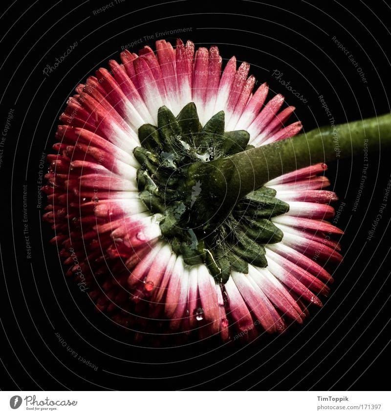 La fleur que tu m'avais jetée Natur schön Blume Pflanze Blüte ästhetisch Stengel Blühend Blumenstrauß Stillleben geschmackvoll