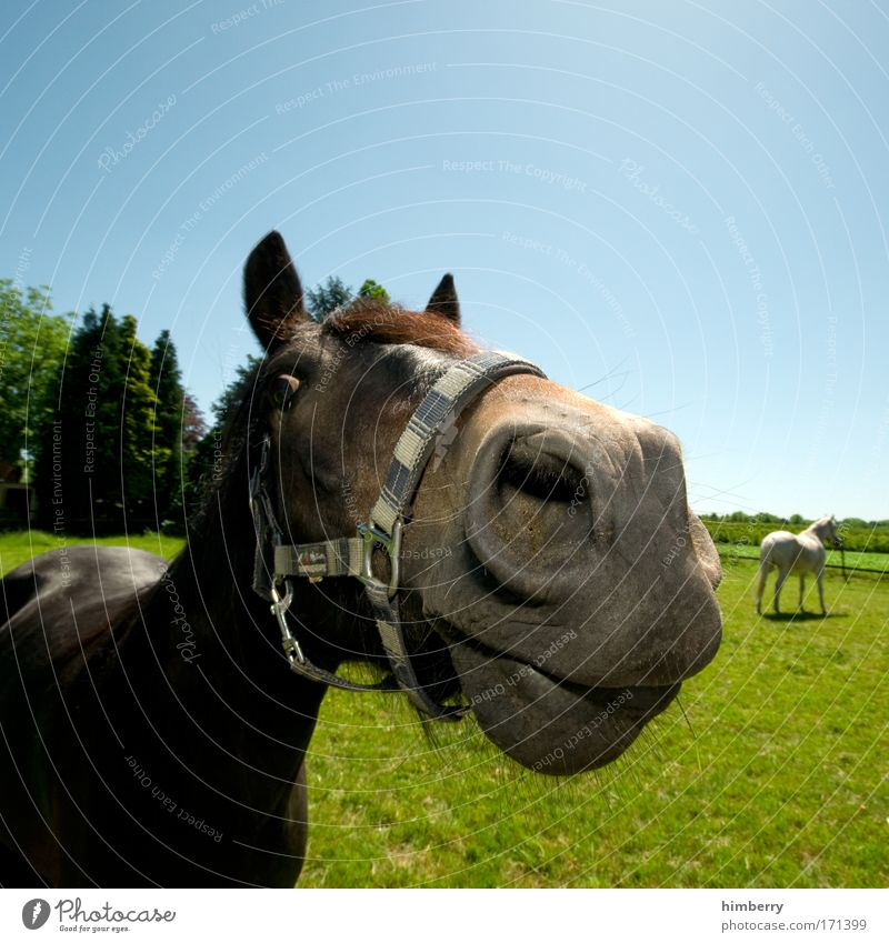 eine pferdestärke Natur Baum Pflanze Freude Tier Wiese Landschaft Gras Feld Kraft Pferd Güterverkehr & Logistik Nutztier