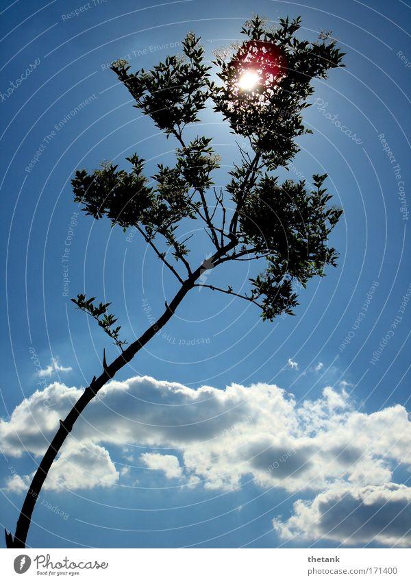 sommertag Himmel weiß Baum blau Ferien & Urlaub & Reisen ruhig Wolken Erholung träumen Zufriedenheit Idylle leuchten Schönes Wetter Wochenende