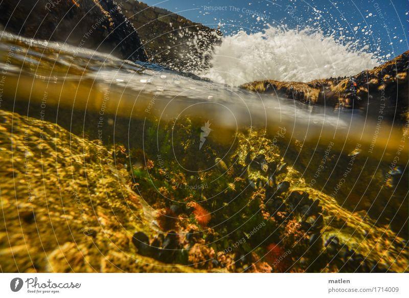 Wasserspiegel Natur Landschaft Pflanze Luft Wassertropfen Himmel Wolkenloser Himmel Sommer Wetter Schönes Wetter Felsen Wellen Küste Meer frisch blau braun gelb