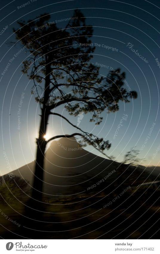 Im vorbeifahren Farbfoto Außenaufnahme Menschenleer Textfreiraum unten Morgendämmerung Dämmerung Schatten Kontrast Silhouette Sonnenlicht Sonnenstrahlen
