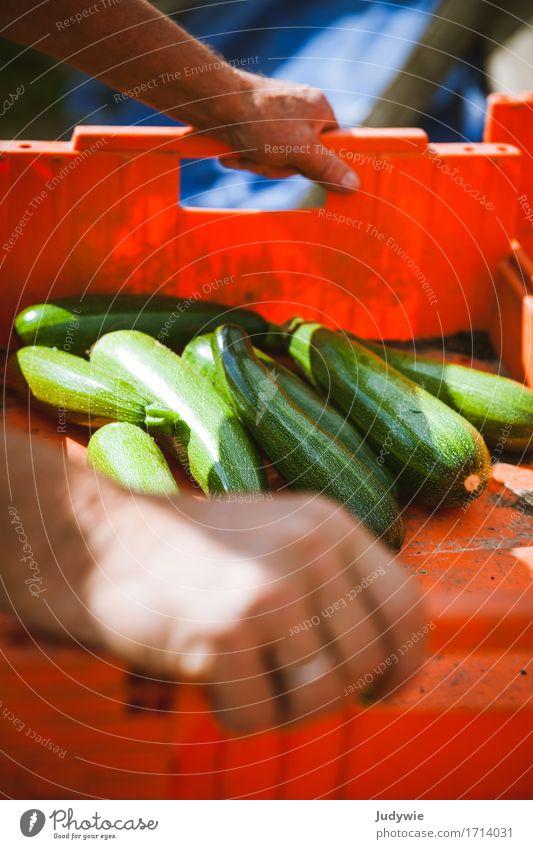 Ernte I Mensch Pflanze Sommer Gesunde Ernährung Hand Erwachsene Umwelt natürlich Lifestyle Gesundheit Lebensmittel Arbeit & Erwerbstätigkeit Freizeit & Hobby
