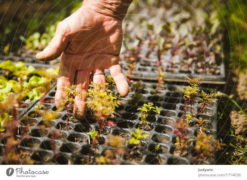 Anfang Mensch Sommer Gesunde Ernährung Hand Leben natürlich Gesundheit klein Garten Lebensmittel Freizeit & Hobby Feld Wachstum Finger berühren
