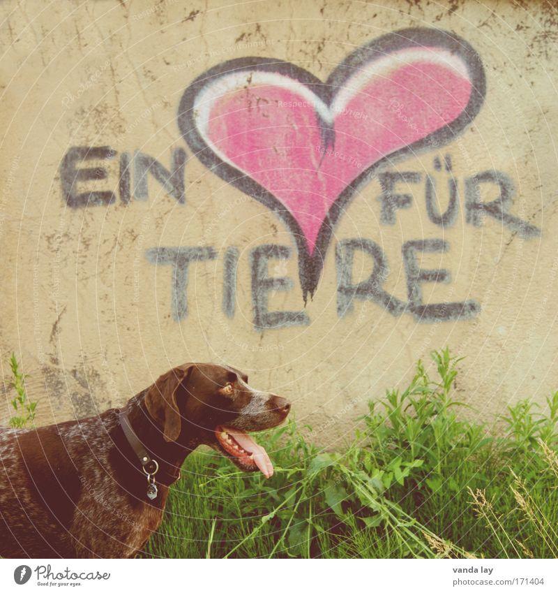 Bester Freund Liebe Tier Hund braun Zusammensein Herz Sicherheit Schutz Vertrauen Warmherzigkeit atmen Haustier Fürsorge Sympathie Begleiter Tierliebe