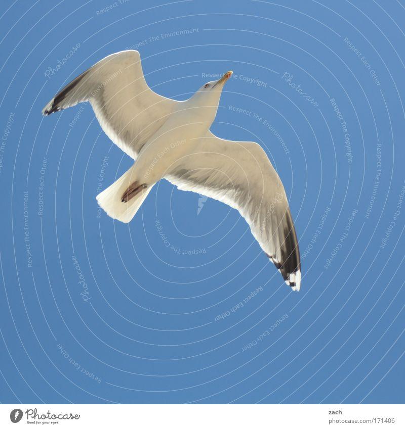 Flug 3211 Natur schön Himmel weiß Meer blau Tier Bewegung Vogel Küste Wind Umwelt fliegen Horizont ästhetisch Luftverkehr