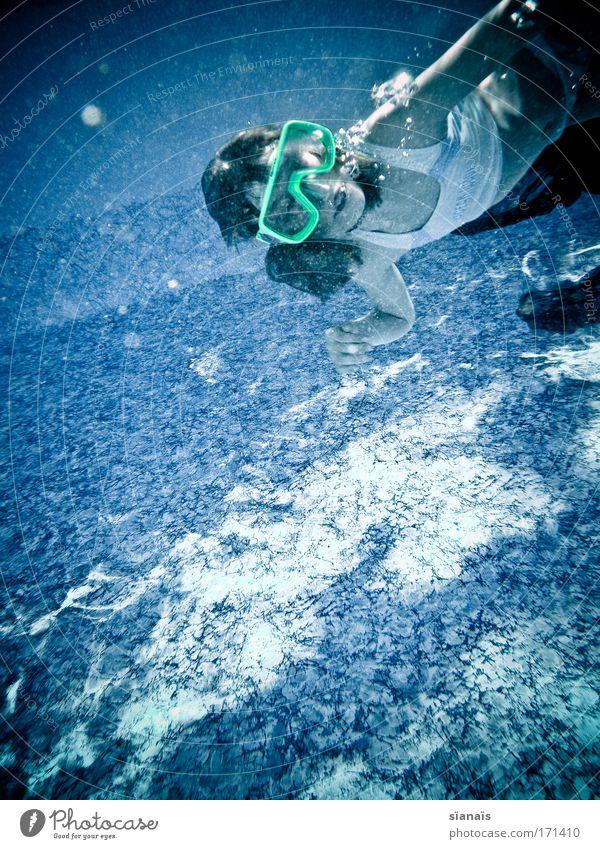kaulquappe Farbfoto Außenaufnahme Innenaufnahme Unterwasseraufnahme Textfreiraum unten Textfreiraum Mitte Tag Oberkörper Blick nach vorn Wegsehen