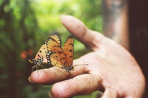 Schmetterlinge Mensch Junge Frau Jugendliche Hand Finger 1 18-30 Jahre Erwachsene Natur Tier Frühling Sommer Wald Nutztier Wildtier 2 dreckig authentisch frei