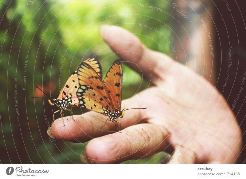 Schmetterlinge Mensch Natur Jugendliche Sommer schön Junge Frau Hand Tier Wald 18-30 Jahre Erwachsene Frühling braun frei dreckig Wildtier