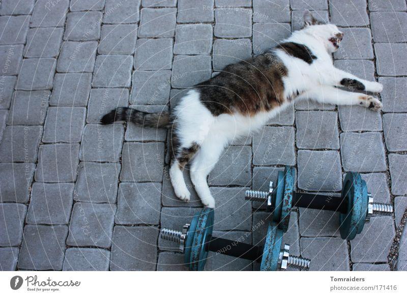 Muskelkater Erholung ruhig Hantel Terrasse Pflastersteine Haustier Katze 1 Tier Stein liegen Sport warten einzigartig muskulös Kraft geduldig Erschöpfung