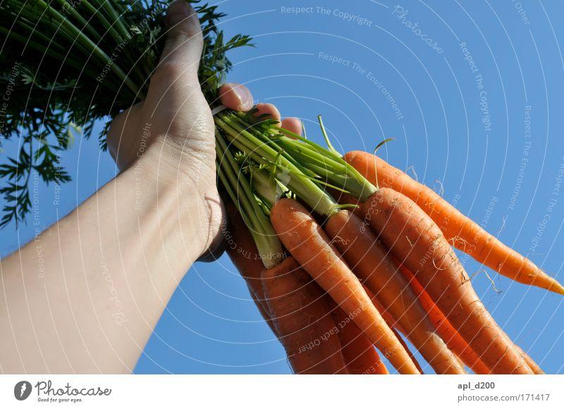 Möhren an die Macht Mensch blau Hand grün Freude Erwachsene Lebensmittel Arme maskulin ästhetisch Erfolg 18-30 Jahre Gemüse Krieg Abendessen Bioprodukte