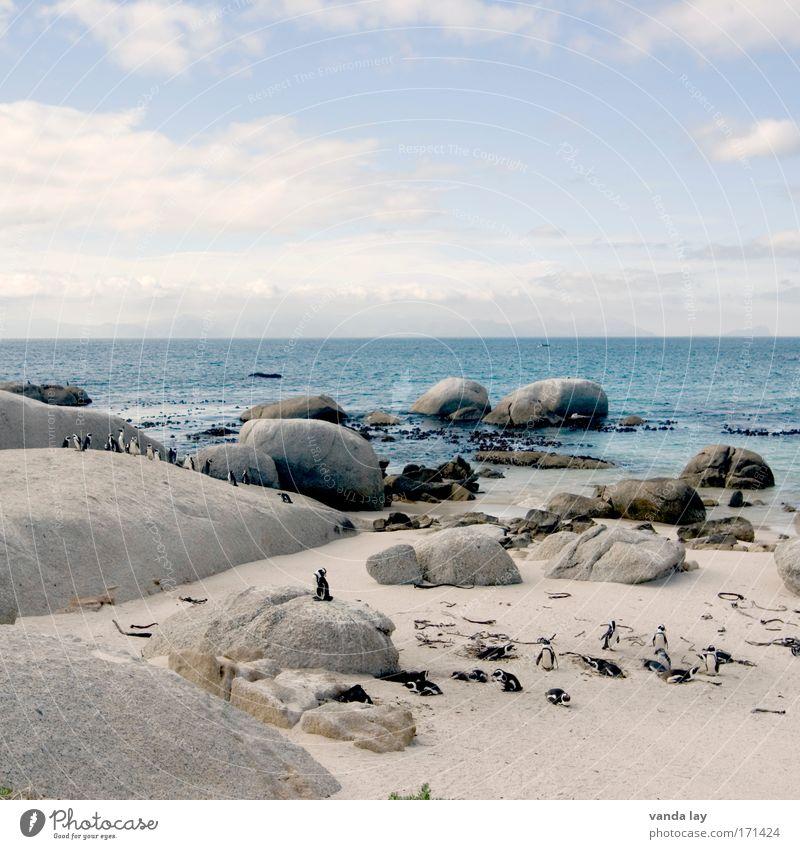 Penguin Paradise Farbfoto Außenaufnahme Menschenleer Textfreiraum oben Tag Totale Sand Wasser Himmel Wolken Schönes Wetter Hügel Felsen Küste Meer Insel Tier