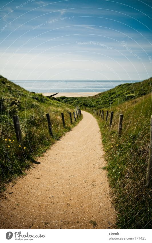 mal wieder hier Natur Meer Sommer Strand Ferien & Urlaub & Reisen Ferne Freiheit Wege & Pfade gehen Horizont Ausflug Tourismus Aussicht Ziel Düne Niederlande
