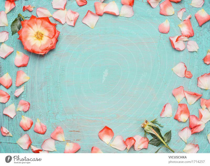 Rahmen aus rosa Rosenblüten auf blauem Hintergrund Stil Design Sommer Veranstaltung Feste & Feiern Valentinstag Muttertag Geburtstag Natur Pflanze Blume Blatt