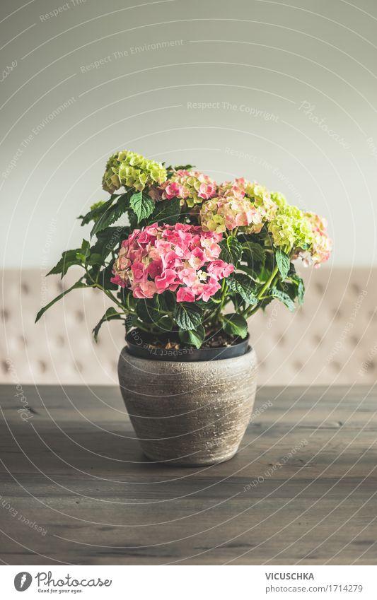 Hortensien im Topf auf dem Tisch im Wohnzimmer Lifestyle Reichtum elegant Stil Design Leben Häusliches Leben Wohnung Innenarchitektur Dekoration & Verzierung