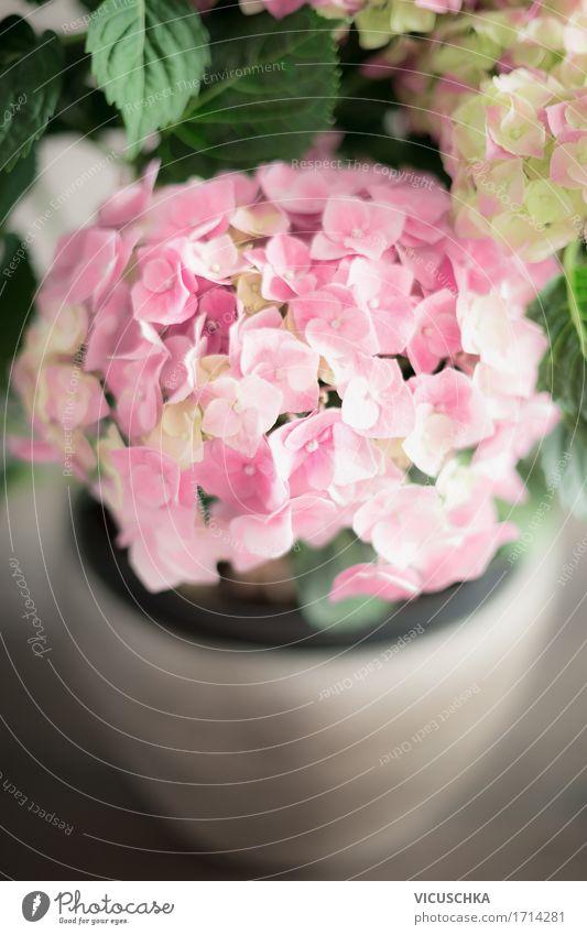 Rosa Hortensien im Blumentopf Natur Pflanze Blume Blatt Leben Blüte Liebe Innenarchitektur Lifestyle Stil Design rosa Wohnung Häusliches Leben Dekoration & Verzierung Romantik