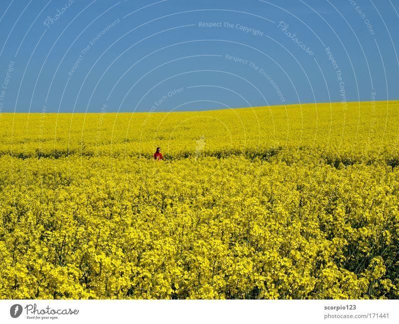 Farbenspiele im Frühling Mensch Kind Natur Mädchen Himmel blau rot gelb Erholung träumen Feld rein Kindheit genießen Schönes Wetter