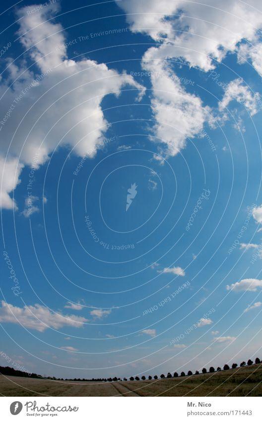 Dem Himmel so nah... Himmel Natur Baum Sommer Wolken Einsamkeit Ferne Umwelt Landschaft Freiheit Erde Horizont Wetter Kraft Feld Klima