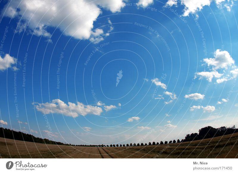 Dem Himmel so nah... 16:9 Himmel Natur blau Baum Ferien & Urlaub & Reisen Sommer Wolken Einsamkeit Erholung Umwelt Landschaft Freiheit Wege & Pfade Horizont Wetter Feld