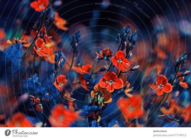 die farben TLÖNen so richtig! Natur Pflanze Sommer Blume Blatt Blüte Frühling Wiese Gras klein Garten Park Feld Veronica
