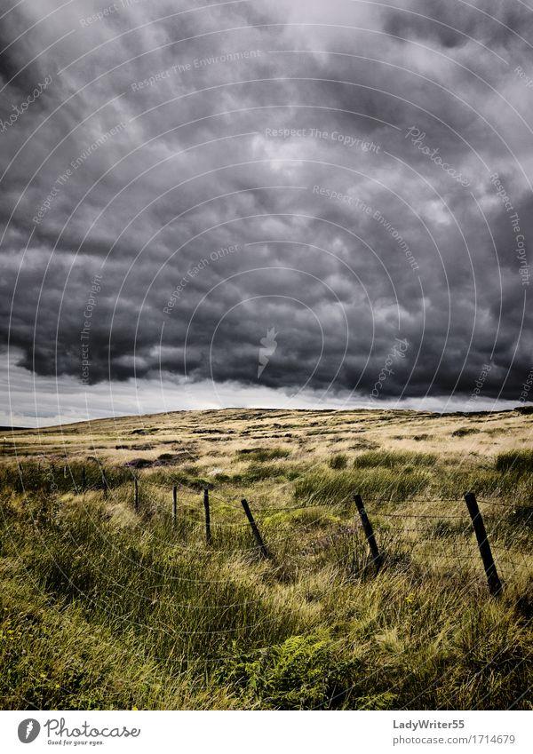 Atmosphärisches Moorland Umwelt Natur Landschaft Himmel Wolken Klima Wetter Unwetter Regen Gras Wiese dunkel natürlich trist grau grün Stimmung Angst Entsetzen