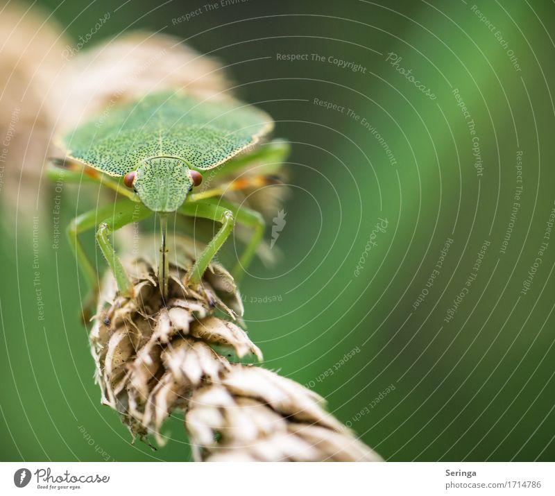 Auf Augenhöhe mit....( Regulus ) :) Pflanze Tier Frühling Sommer Gras Sträucher Farn Blatt Wildpflanze Park Wald Wildtier Käfer Tiergesicht Flügel 1 krabbeln