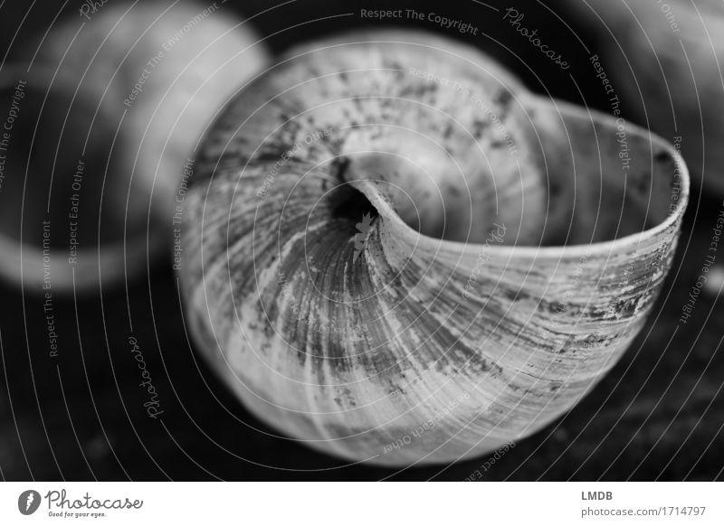 Schnecken-Schaufel I Tier 1 schwarz weiß Glaube demütig Traurigkeit Sorge Trauer Tod Schneckenhaus Windung gedreht dreckig Furche Vergänglichkeit Verfall alt