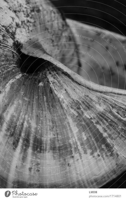 Schnecken-Schaufel II Tier Totes Tier alt rund schwarz weiß ruhig Hoffnung Glaube demütig Sorge Trauer Tod besinnlich Denken karg Schneckenhaus Hülle