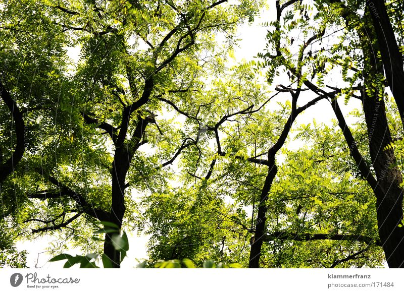 Die Lichtung Natur alt grün Baum Pflanze Blatt Wald Erholung Umwelt Holz Glück Stimmung Kraft Ausflug Wachstum Ziel