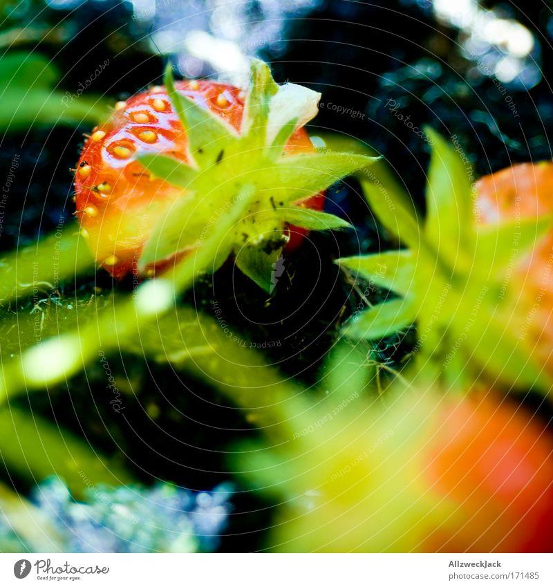 homegrow Farbfoto Außenaufnahme Makroaufnahme Menschenleer Tag Schatten Starke Tiefenschärfe Tier Sommer Pflanze Nutzpflanze Garten Gesundheit grün rot