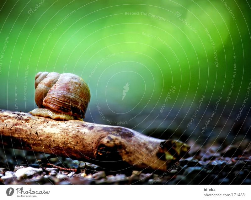 Schnecke, einsam, scheu, sucht: Natur grün rot Sommer Tier Umwelt Gefühle grau Traurigkeit träumen braun Stimmung Erde Angst Wildtier warten