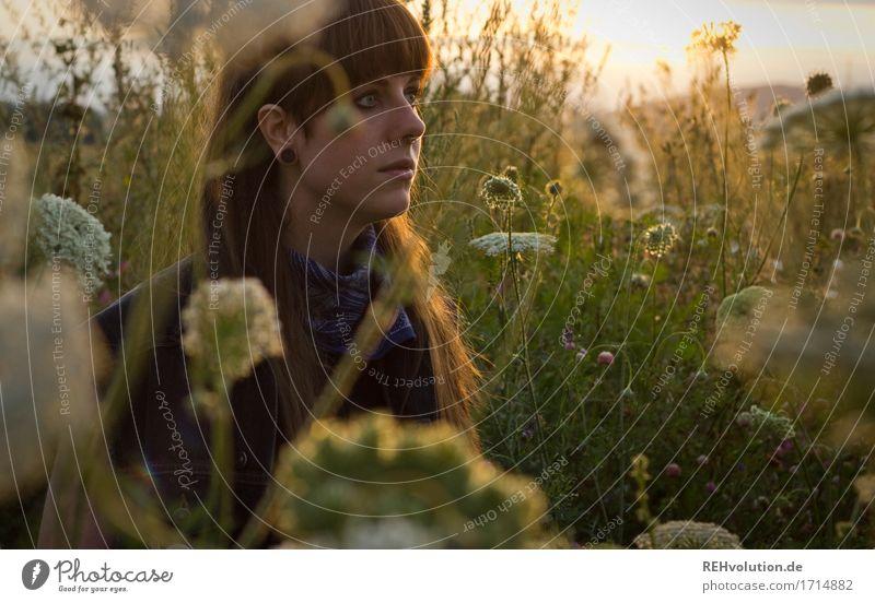 Carina | im Abendlicht Mensch Frau Natur Jugendliche Pflanze Sommer Junge Frau schön Landschaft Blume Einsamkeit 18-30 Jahre Gesicht Erwachsene Umwelt Wiese