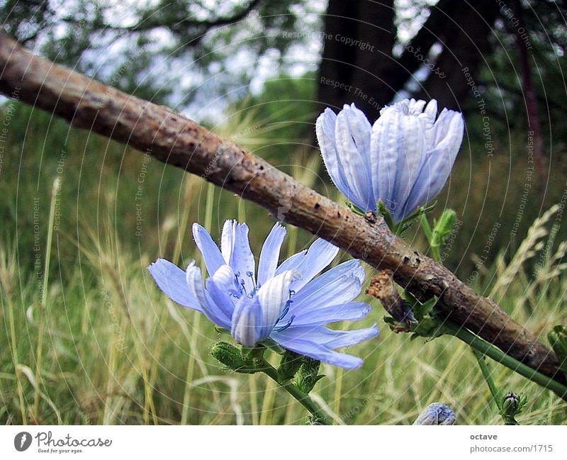 Frühlingswiese Natur Wiese Wiesenblume Frühlingstag