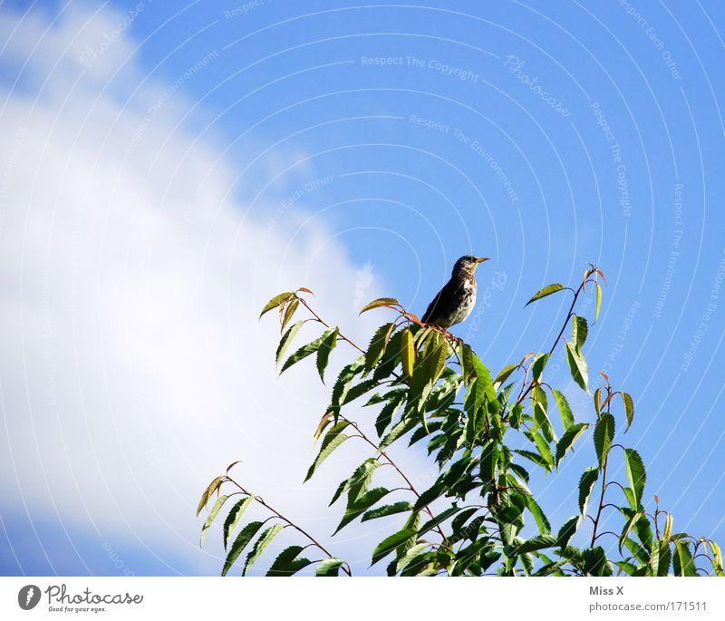 Wärmen in der Sonne Außenaufnahme Nahaufnahme Sonnenlicht Tierporträt Natur Himmel Schönes Wetter Sträucher Blatt Wildtier Vogel Flügel 1 Tierjunges fliegen