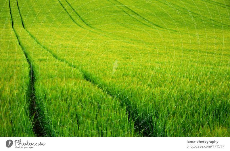 Roggenmeer Natur grün Sommer Pflanze Landschaft Umwelt Wiese Gras Frühling Feld Wind groß Spuren Landwirtschaft Getreide Bioprodukte
