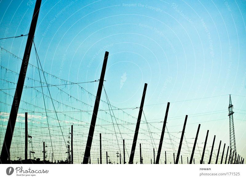 grundversorgung Himmel Pflanze Wachstum Kabel Technik & Technologie Netz Schnur Landwirtschaft Strommast Bayern Pfosten himmelblau Hopfen Brauerei Hopfenblüte Hopfenblatt