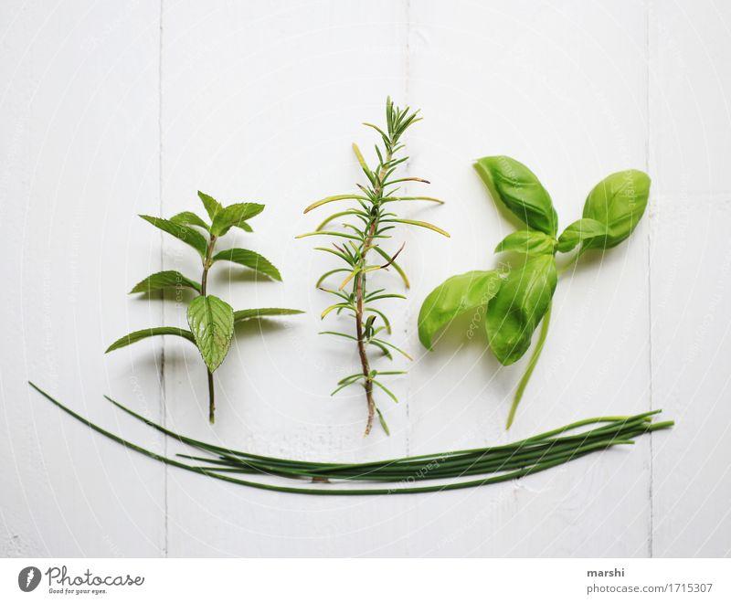 Kräuterkunde Natur Pflanze grün Kräuter & Gewürze Rosmarin Minze Basilikum Schnittlauch Freisteller Würzig geschmackvoll Küchenkräuter Farbfoto Innenaufnahme