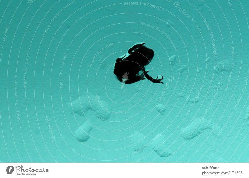 Froschtraum I Makroaufnahme Froschperspektive Umwelt Natur 1 Tier träumen Kröte Molch Einsamkeit sitzen warten Tropfen Wasser Arme Beine Finger türkis