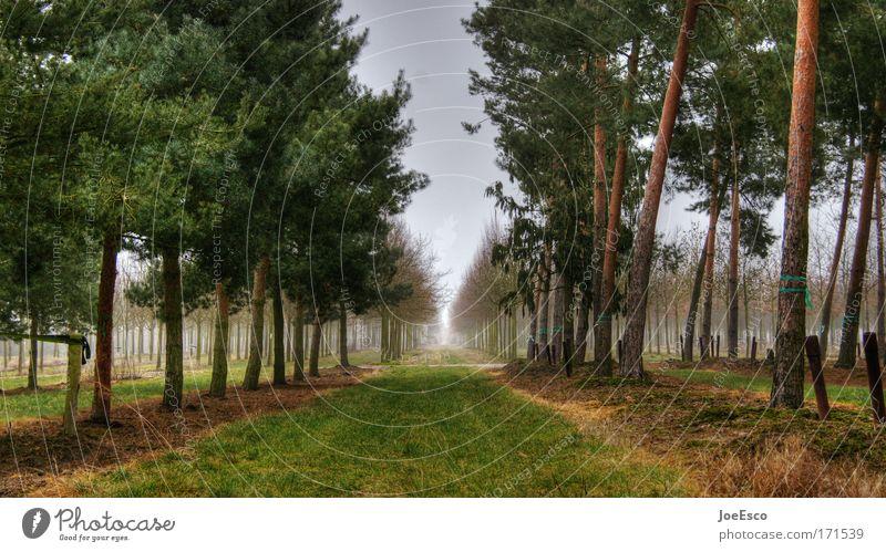 waldspaziergang Baum Ferien & Urlaub & Reisen Ferne Wald Umwelt Gras Park Erde Horizont Ausflug Perspektive Spaziergang Nordsee Ostsee Umweltschutz Allee