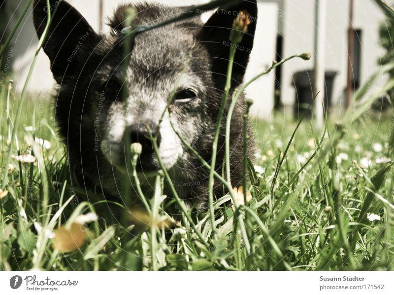 Blümchen Blume Pflanze Ferien & Urlaub & Reisen ruhig Wiese Spielen Gras Freiheit Garten Glück Hund Park hell wandern Erde