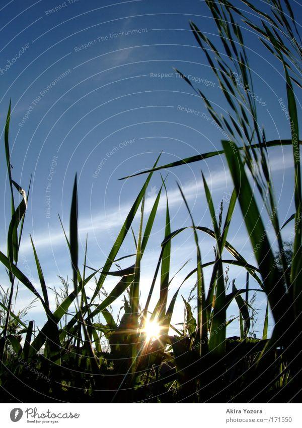 Little Sun Natur Himmel Sonne grün blau ruhig schwarz Wolken gelb Erholung Wiese Gras Landschaft Zufriedenheit frei Ausflug
