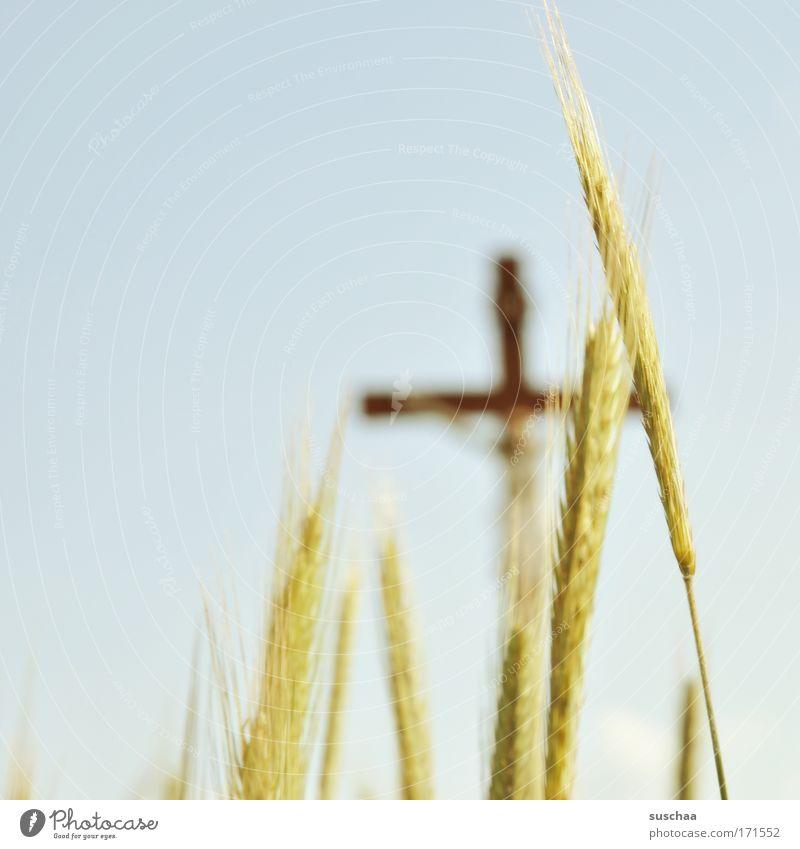 kornfeld-INRI Natur Pflanze Sommer Landschaft Luft Religion & Glaube Umwelt Getreide Kreuz Wolkenloser Himmel
