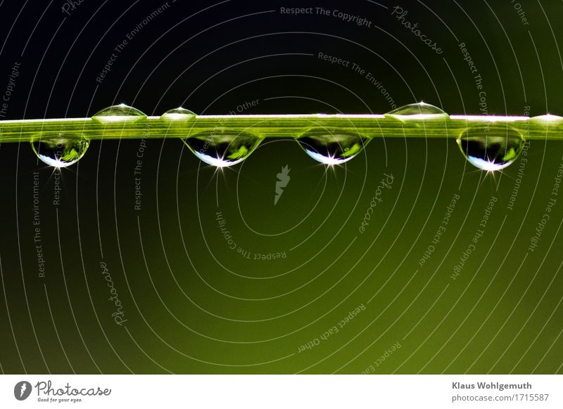 Nach dem Regen Umwelt Natur Pflanze Sonne Klima Wetter Schönes Wetter Gras Grünpflanze Garten Park Wiese Wald Urwald Wasser glänzend hängen leuchten elegant