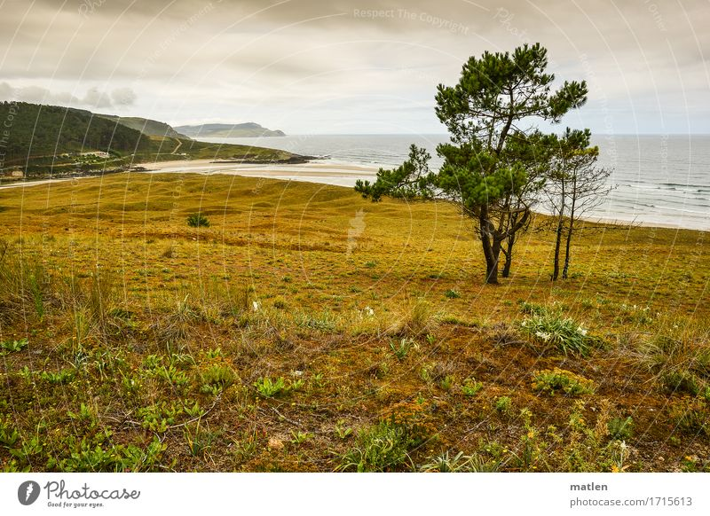 rauh Natur Landschaft Pflanze Wasser Himmel Wolken Baum Gras Wiese Wald Hügel Felsen Wellen Küste Flussufer Strand Bucht Meer kalt braun grau grün Farbfoto