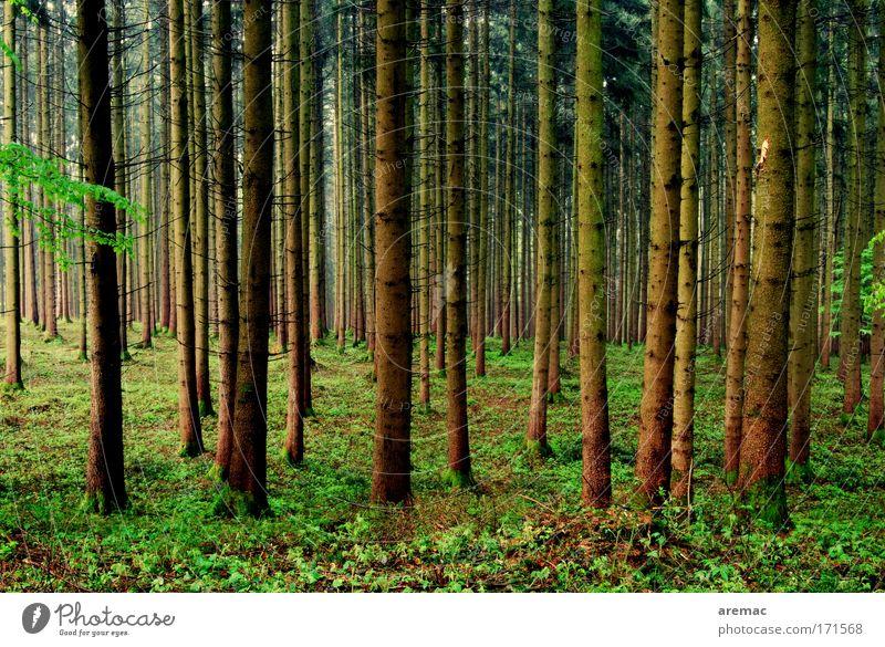 Wandertag Natur Baum grün Sommer ruhig Tier Wald Landschaft Stimmung braun Wetter schlechtes Wetter