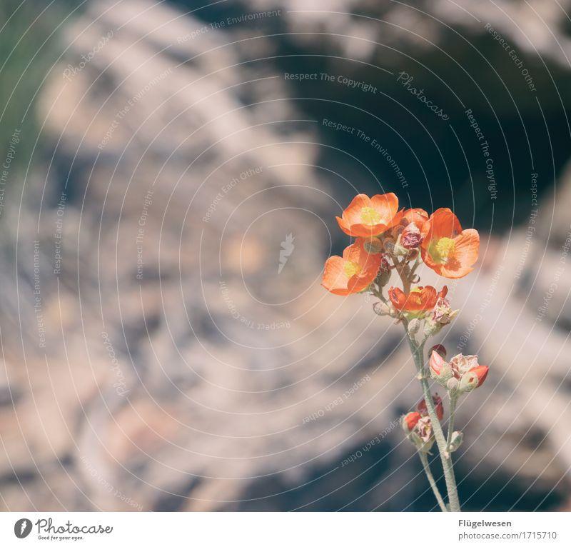 Beautiful Amerika (x) Himmel Ferien & Urlaub & Reisen Pflanze Blume Landschaft Wolken Tier Ferne Berge u. Gebirge Blüte Freiheit orange Sträucher Aussicht USA