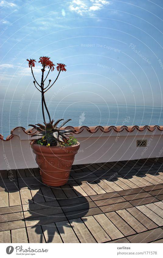 Kein Blumentopf zu gewinnen ? Meer blau Pflanze Ferien & Urlaub & Reisen ruhig Erholung Holz träumen Architektur hoch ästhetisch Insel Dach heiß Lebensfreude